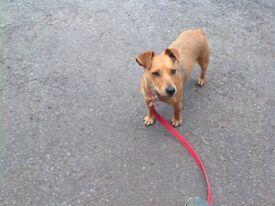 Small terrier girl