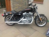 Harley Davidson 883 XL superlow
