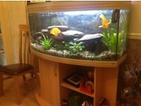 4ft Bow front Aquarium and stand