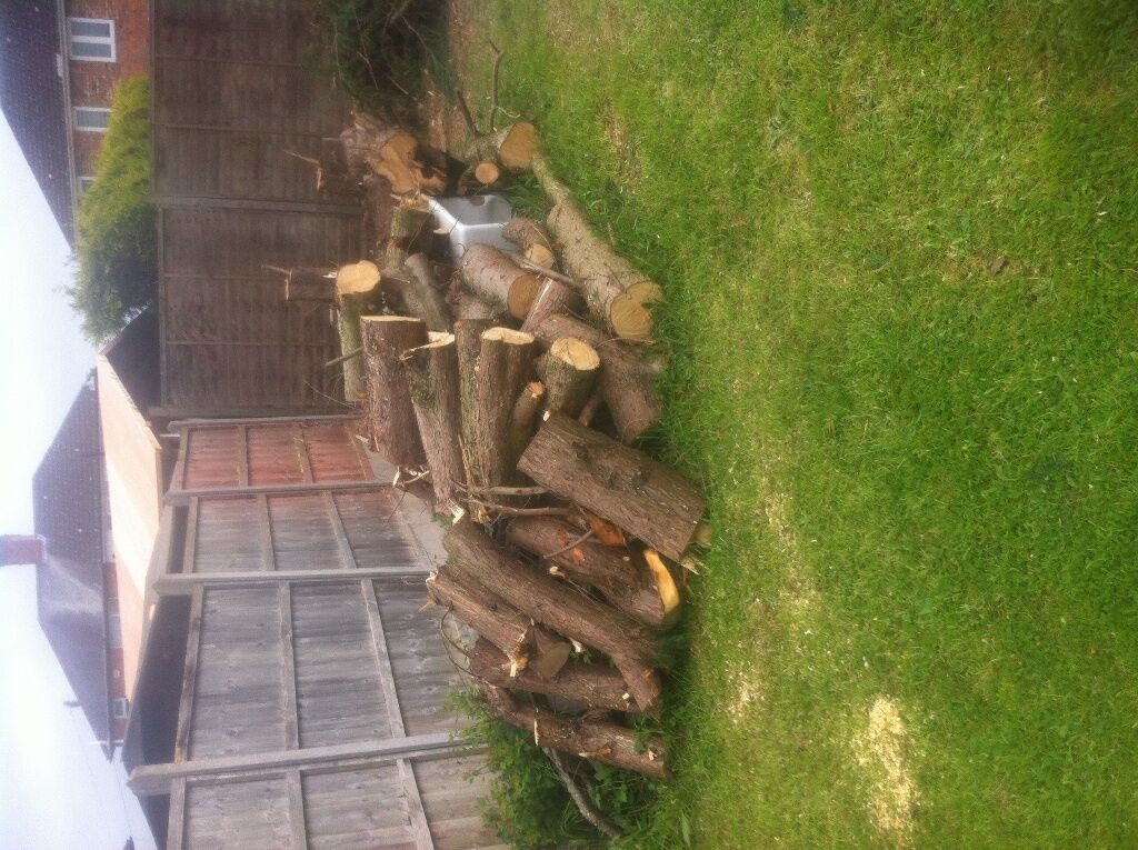 Free Of Charge Collection Only Conifer Trees Cut Down Loads Tree Trunks Chopped