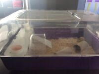 Hamster cage including food bowl and bottle. Hamster ball and free hamster.