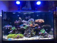 Red Sea 250l mature marine fish tank
