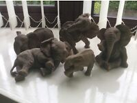 Paw Prints elephants