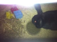 2 year old female rabbit and cage