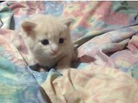 Kittens