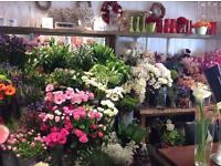 FLORIST Vacancy In Our Busy Shop - North Of NORWICH