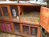Rabbits with hutch