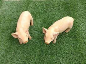 Outdoor Resin Baby Garden Pigs * New *
