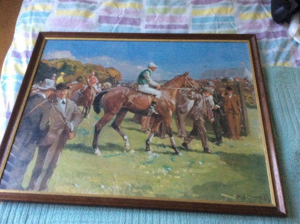 Racing horse pictures