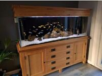 Aquarium and Solid Oak Stand and Hood