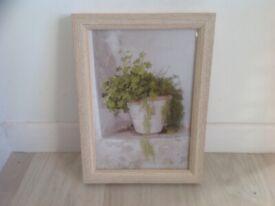 Framed Fern photograph