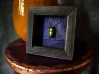 Taxidermy Green Beetle