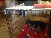 Large and small dog cage