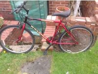 Raleigh bike ,suit teenager. Require one tube and little clean selling cheap to clear space