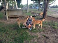 Dog Walker/Pet sitting