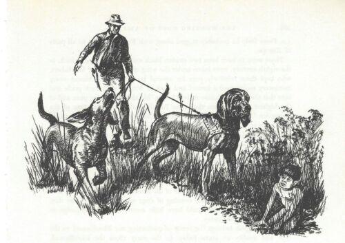 BLOODHOUND - 1964 Dog Art Print - MATTED