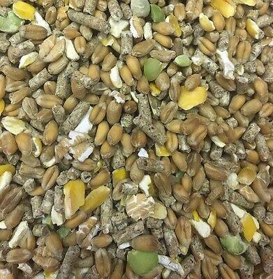 Premium Poultry Mix 1KG Wheat Corn Maize Pea Layer Pellet High Quality Dust Free