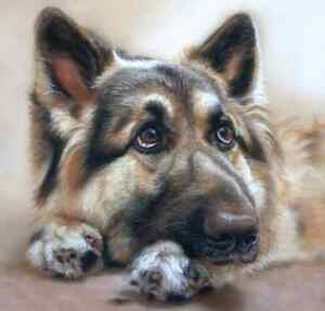 Pet Portraits from your Photos **GREAT PRICE**