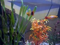 Fish Tank(40l) with 4 Fish and Decorations, Built In Lights, Filter Pump Included.