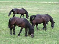 WANT to RENT stables / Livery Yard/ Barn / smallholding/ for horses