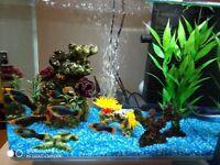 Juwel Vio 40 LED fish tank (full setup) & fishes