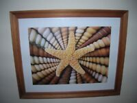 2 IKEA Framed Seashell and Starfish Prints - £8 each