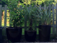 COLLECTION OF POTS, PLANTS & GARDEN FURNITURE