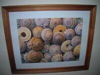 2 IKEA Framed Seashell and Starfish Prints - £8 each