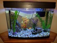 Fish Tank(40l) with 16 Fish and Decorations, Built In Lights, Filter Pump Included.
