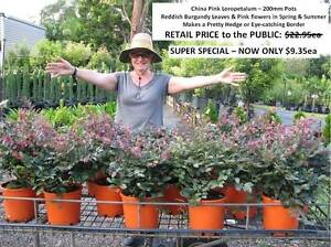 SUPER SPECIALS - YOU MUST SEE THESE! From $4.95ea  HS104 Tallai Gold Coast City Preview