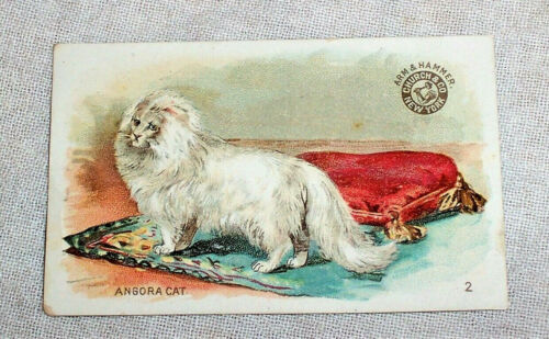 circa 1910 Antique ANGORA CAT Arm & Hammer Interesting Animals Card No. 2
