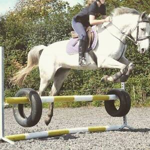 Stunning warmblood pony available Lidcombe Auburn Area Preview