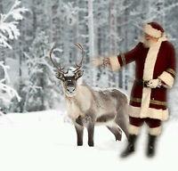 Hire Santa Claus