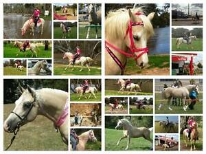 Stunning triple reg welsh arab palomino gelding show ARC pleasure Nyah Swan Hill Area Preview