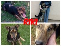 1 year old Riki needs first home