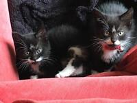 5 month old kittens, brother and sister, he's fixed, both had injections