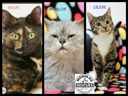 We have CATS too! www.doggierescue.com Ingleside Warringah Area Preview
