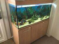 240 ltr fish tank and stand