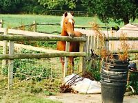 Small rider wanted for sweet ex riding school pony
