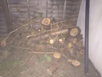 Wood (logs from freshly cut hedge) for free