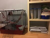 2 female rats, one year old, very friendly, complete with cage etc