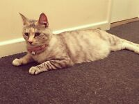 3 year old jelly needs a new permanent home