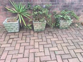Concrete planters x 3 with plants