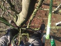 Tree services Angus qualified and insured