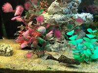 Medium tropic fish tank