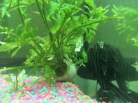 Tropical Fish (Plecs, Catfish, Corys)
