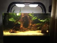 TMC signature fish tank 100L