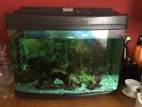 60 litre fish tank, with pump and accessories