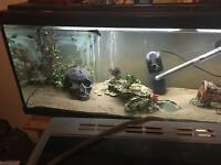 Tropical fish, tank etc