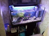 Fish Tank Complete set up - Tropical or coldwater